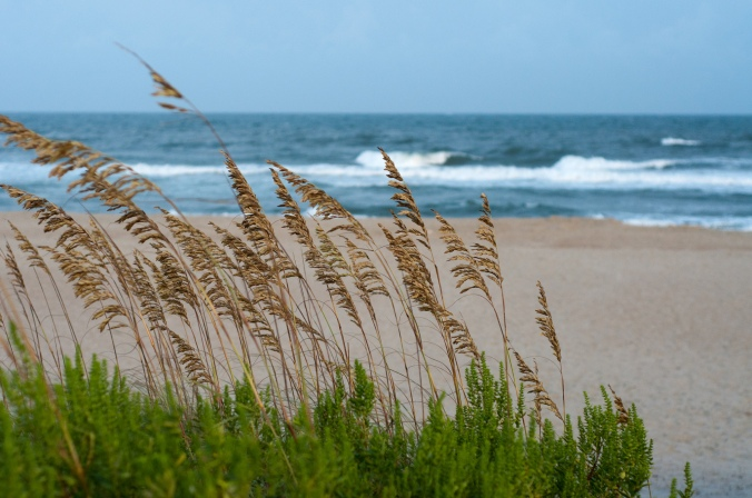 "Flickr photo ""Sea Oats"" by James Lee"